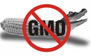 Вред ГМО для организма человека