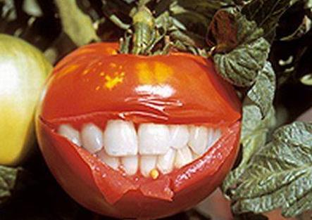 Что нужно знать о ГМО продуктах