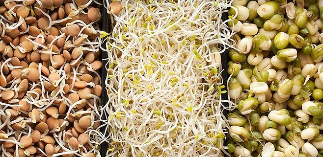 Пророщенные семена — Ваше здоровье