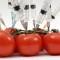 Осторожно: продукты ГМО!